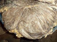 Dried Salted Beef Omasum