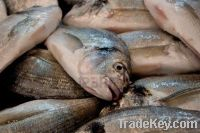 Fresh and Frozen Fish for sell