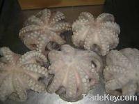 sea frozen octopus vulgaris for sale
