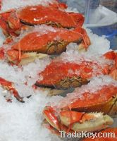Frozen Crabs for sell