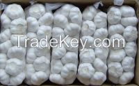 Normal White Garlic for sell