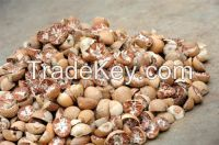 Betel Nuts for sell