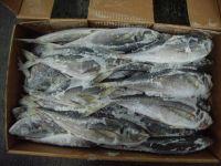 Frozen Horse Mackerel, Pacific Mackerel, Tuna, . Trout, Salmon, Bonito, Tilapia, Squid, Barracuda Fish