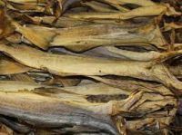 Quality Grade A Dried StockFish / Stock Fish for Sale