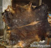 Sell wet salted cowhides