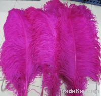 Sell white and pink ostrich feathers and plumes