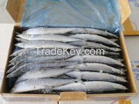 Frozen Horse Mackerel Fish Whole Round