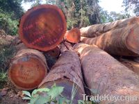 Sell tropical timbers and logs