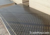 Sell With Logo Construction Laminated Plywood