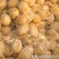 jumbo coconut
