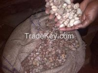 Raw cashew nuts of high quality for human consumption