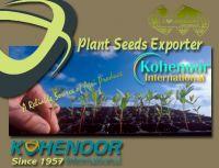 Sell Alfalfa Seed , Clover Seeds