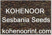Sesbania Seeds Exporter
