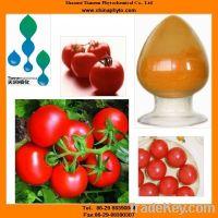 Tomato extract with lycopene antioxidant capsules, powder, oil