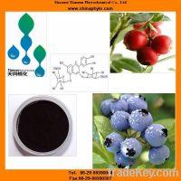 Sell organic bilberry, blueberry extract Vaccinium Myrtillus powder