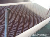 Sell Concrete Formwork Board