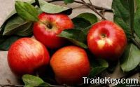 Sell Fresh apple