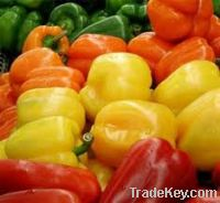 Sell Peppers,