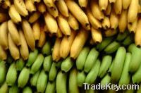 Sell    Fresh Bananas