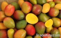 Sell  Fresh Mangos