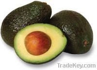 Sell  Fresh Avocados