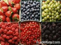 Sell   Fresh Berries