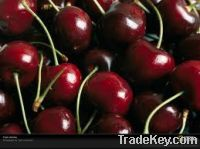 Sell Fresh Cherries