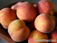 Sell   Fresh Peaches