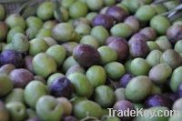 Sell  Fresh Olives