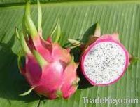 Sell  Fresh Dragon Fruit