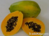 Sell  Fresh Papaya