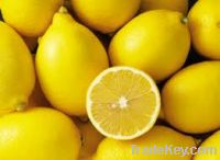 Sell  Fresh Lemons