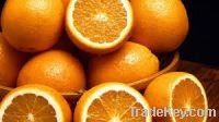 Sell  Fresh Oranges