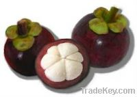 Sell Fresh Mangosteen