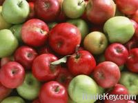 Sell  Fresh Apples
