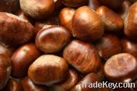 Sell  Chestnuts