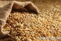 Barley for sale