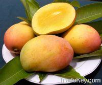 Sell Fresh Mangoes