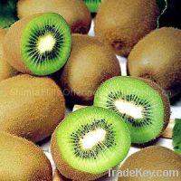 Sell Fresh Kiwi Fruits