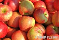 Sell Fresh Apples