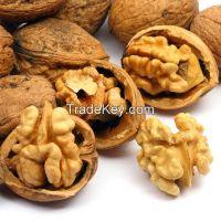 Walnut Kernels , Natural Unshelled Walnuts, Walnuts in shell or kernel