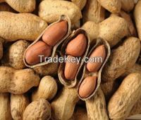 Peanuts in shell and without