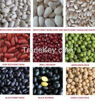 Sugar Beans Kidney Beans Mung Beans For Sale