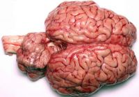 Clean and Quality Grade A Frozen Beef Brain