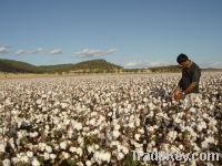 Sell Organic raw cotton 1000$ USED per tonne