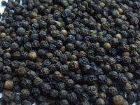 Black Pepper 500g/L-550g/L