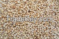 Sesame Seeds, Chia Seeds, Jatropha Seeds