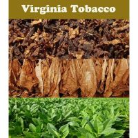Tobacco Seeds - Virginia Gold