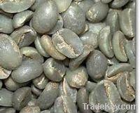 Sell AAA Arabica green coffee beans