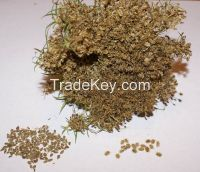 Carrot Seeds, Carrot Seed Powder